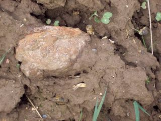 Mills Bomb in Field Today