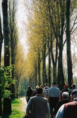 Spring Walk To Hooge